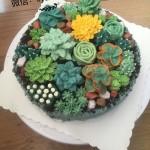 韩式豆沙裱花(多肉蛋糕)