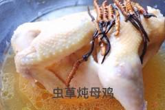 冬虫夏草炖母鸡