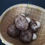 豆沙蘑菇包