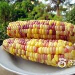 水煮彩色糯玉米