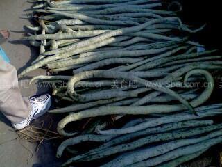 蛇瓜烩干贝