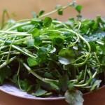 西洋菜鲜陈肾汤(家庭食疗)