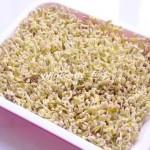 家庭发制绿豆芽(豆制品)