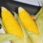 水煮老玉米(零食菜谱)