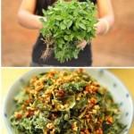 蒸荆芥(清蒸菜谱-荆芥麦饭)