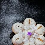 花形蜜豆面包(早餐菜谱)
