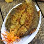 油煎华子鱼(揭秘舌尖2秘境美食)