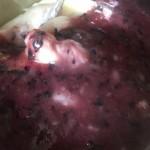 山药蓝莓泥