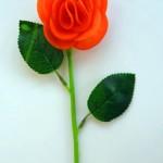 胡萝卜玫瑰花
