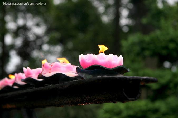 洗涤心灵的尘埃——万年寺、报国寺、伏虎寺