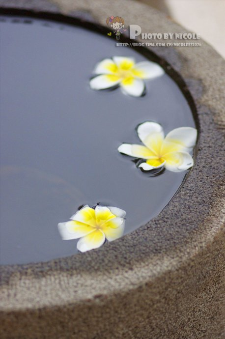 【三亚的绿色健康之旅】深入后厨,探寻瑜伽韵律美食的奥妙