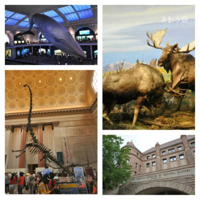 纽约:自然历史博物馆里的奇妙糖果