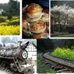 """开往春天的小火车:专供煤矿工人的""""保健饼"""""""
