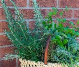 十四道菜认识十种西餐调味香草-Herbs