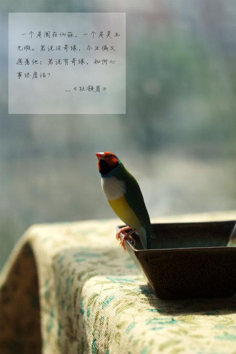 会吃的女人美如花-----蒜蓉粉丝蒸丝瓜和比翼鸟