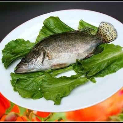 比喻为白龙的桂鱼在唐代一举蹿红