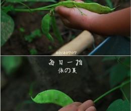 有机生活之自种自吃——牛蒡炒扁豆丝