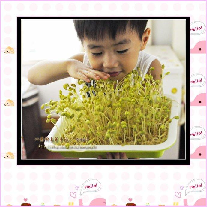 和3岁孩子一起体验种豆芽的乐趣:自种豆芽做一道全能营养凉拌菜:【粉条伴豆芽】