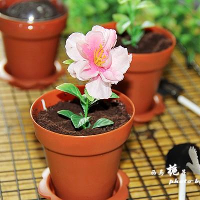 超可爱的奥利奥酸奶木糠盆栽
