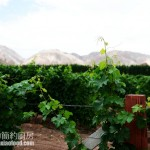 【新疆美食美酒行之二】探访中国年度酒庄中国最美葡萄园(学做维吾尔族美食)