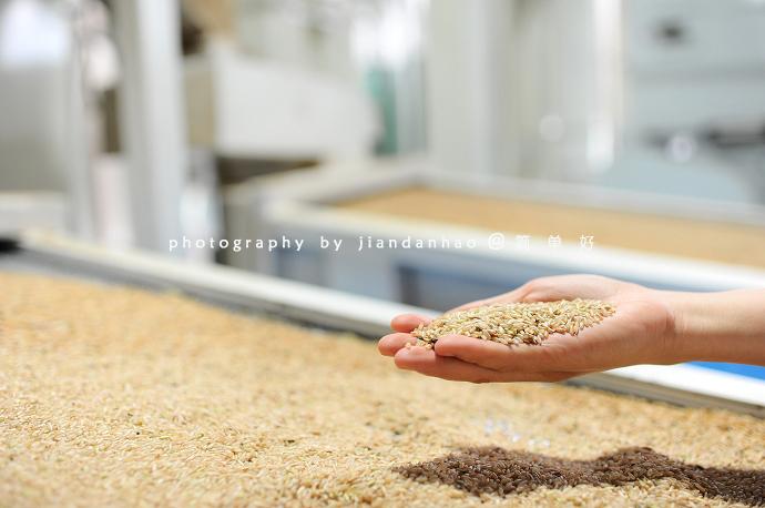 #新浪地标美食探秘之旅#看水稻如何变大米,走进五常米厂和农家