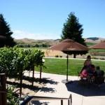 浮光掠影游美国2:纳帕酒谷,那些有关阳光、美酒与慢节奏的一切