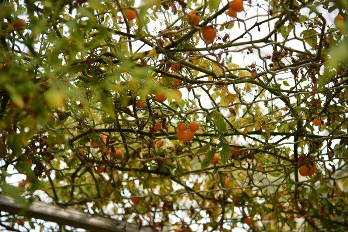 #新浪地标美食之旅第二季#走进原生态的逊克&北纬49度