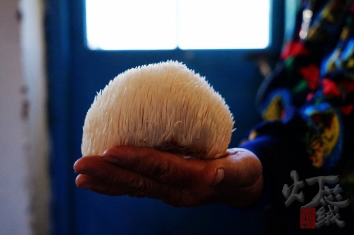 #新浪地标美食之旅#——采蘑菇摘南瓜,品尝地道逊克农家菜