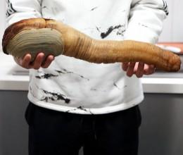 象拔蚌--详细图解处理方法及几道料理