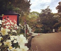 日本|在微凉的夏日与京都有个约会——京都(下)