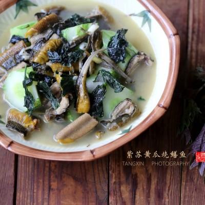 紫苏黄瓜烧鳝鱼