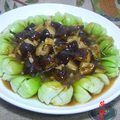 香菇四季青