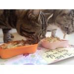 貓飯-優格雞肉沙拉