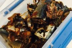 油渍秋刀鱼