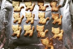 猫咪饼干🍪